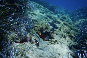 Parrot Fish Kakava reef